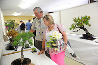 Margaret and Bill Harris of Salinas enjoy the ikebana and bonsai displays during the 63rd annual Obon Festival at the Buddhist Temple of Salinas on Sunday.