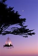 Recreational Tree Climbing on the Caliiforna Coast near Elk.