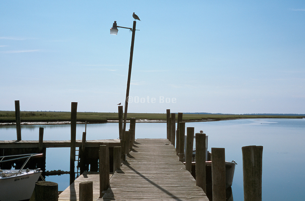 Bird on light post at the end of a pier at Wachapreague, Verginia, Wetlands, Atlantic Ocean.