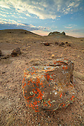 Lichen covered rock at sunrise in the Red Desert of Wyoming