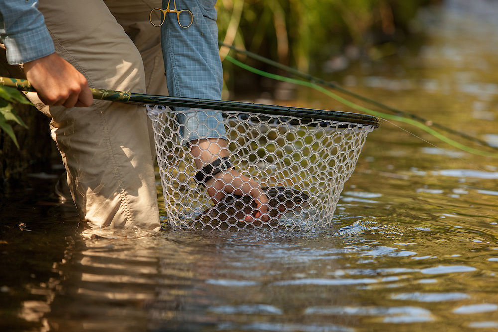 Rainbow Trout in a net. Beaver Creek Virginia
