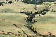 Pasture and cows on Vernon Mountain in Coldstream, British Columbia, Canada