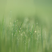 """""""Green Streak""""<br /> <br /> Pure green nature abstract with vertical lines, bokeh, soft shades of green, and a magical feel!"""