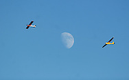 Middletown, N.Y. -  A single-engine plane tows a glider past the moon on Oct. 21, 2007.