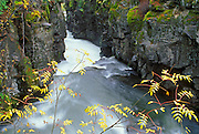 Fall color and moss covered rocks along the Rogue River Gorge, Rogue River National Forest, Oregon