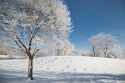 Snow covered trees on landscape, Eichenau, F¸rstenfeldbruck, Bavaria, Germany