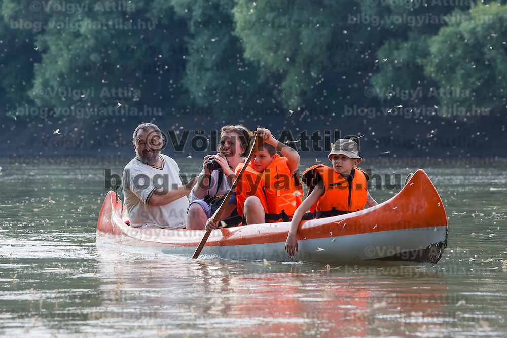 People in a boat watch the yearly few days long swarming of the long-tailed mayfly (Palingenia longicauda) on the river Tisza in Tiszainoka (some 135 km south-east from Budapest), Hungary on June 23, 2013. ATTILA VOLGYI<br /> The long-tailed mayfly larves live 3 years under water level in the river banks then swarm out for a one day period of their life to die after mating.