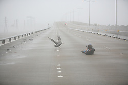 Stock photo of a man in the road photographing a pelican during Hurricane Ike
