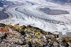 Lowell Glacier, Kluane National Park, Yukon