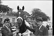 """19/09/1962<br /> 09/19/1962<br /> 19 September 1962<br /> Irish St. Leger at the Curragh Race Course, Co. Kildare. Image shows """"Arctic Vale"""" winner of the race being led in with trainer Paddy Prendergast  on right."""