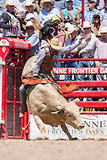 Bull rider Caleb Sanderson hangs on during the Bull Riding finals at the Cheyenne Frontier Days rodeo in Frontier Park Arena July 26, 2015 in Cheyenne, Wyoming. Frontier Days celebrates the cowboy traditions of the west with a rodeo, parade and fair.