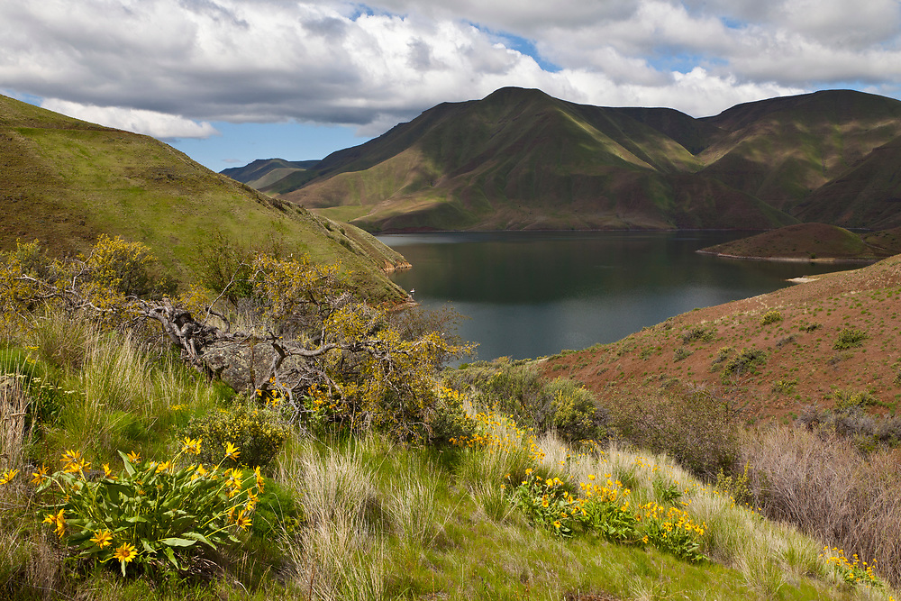 Licensing - Open Edition Prints <br /> Brownlee Reservoir on the Snake River at the southern end of Hells Canyon near Farewell Bend, Oregon, on the Idaho Oregon Board, with Yellow Balsam Root Flowers in springtime