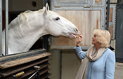 The Duchess of Cornwall views the horses during her visit to the Spanish Riding School in Vienna, Austria on the ninth day of the Prince of Wales' European tour.