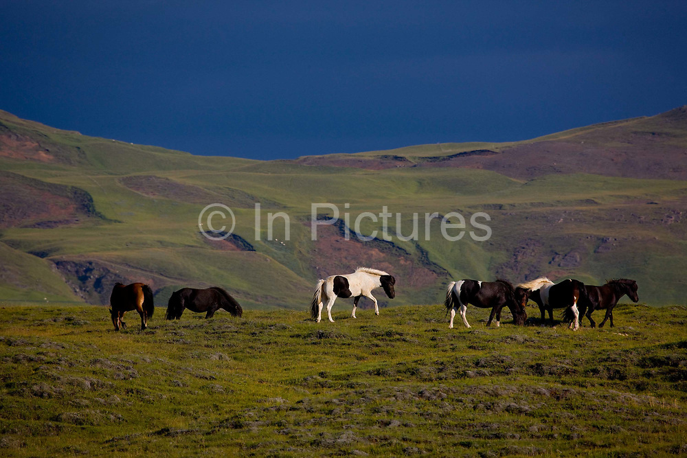 Horse riding in Southern Iceland.