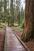 Nice boardwalk along the Big trees Trail.