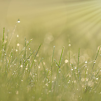 """""""All About Light""""<br /> <br /> This green and golden sunlight filled nature abstract is jaw dropping gorgeous!"""