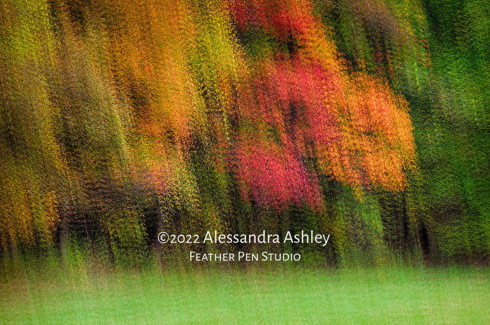 Multiple exposure montage, the brilliant colors of autumn under a cloudy sky.