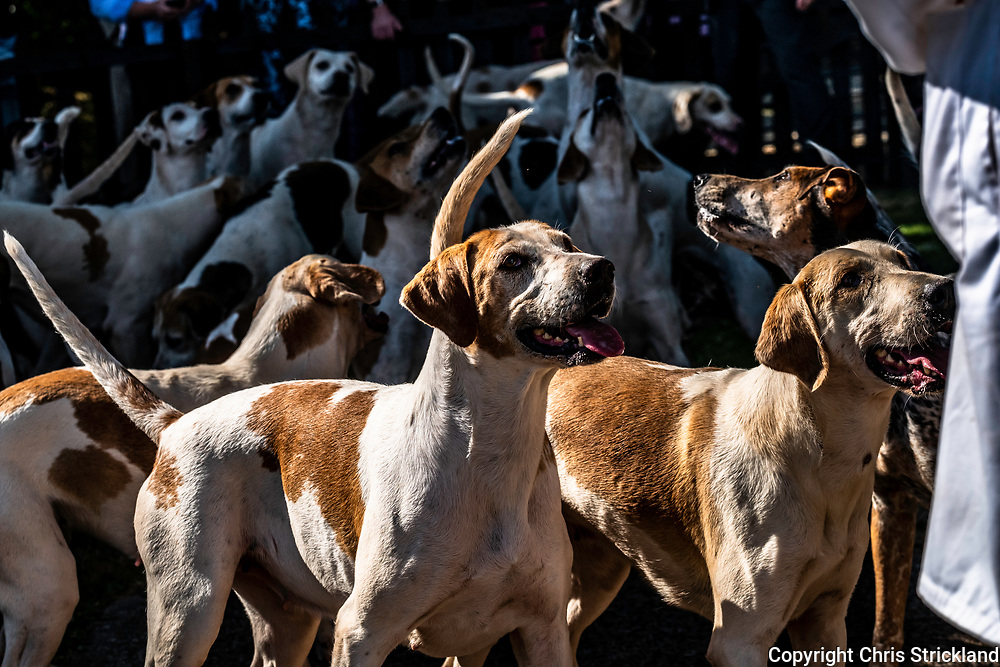 Eildon, Melrose, Scottish Borders, UK. 8th July 2018. The Duke of Buccleuch Hunt, the largest pack of foxhounds in Scotland, hold their annual puppy show for supporters. Grand National winning jockey Ryan Mania, now huntsman of the Berwickshire, and Scotlands only huntswoman Clare Bellamy of the Lauderdale, judged the hounds.