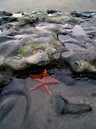 Starfish in a tidal pool at Point Reyes National Seashore.
