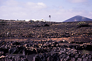 Black volcanic pits used for growing grapes vines La Geria, Lanzarote, Canary Islands, Spain1979