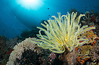 Feather Star, dive boat, and sunburst<br /> <br /> Shot in Indonesia