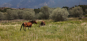 Horses in field in New Mexico
