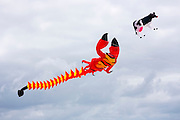 Kite festival of bright color kites and lobster kite in the sky above Fano Island - Fanoe - South Jutland, Denmark