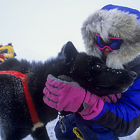 John Stetson praises dog after long day of mushing on Great Slave Lake, NWT, Canada.
