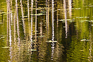 ripples on the surface of a beaver pond on the Kitsap Peninsula in Puget Sound have their motion frozen in the image due to the use of a high shutter speed.