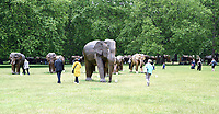 over hundred elephants are wandering around in London Green Park, St James Park, Berkeley Square as part of the Coexistence exhibition,London, UK