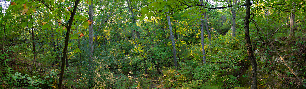 View of forest canopy from sandstone bluff at a box canyon near Hillsboro, Missouri. EDITORS NOTE: Image is a composite panorama.