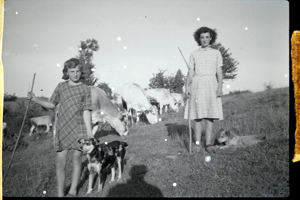 old and damaged image of two girls herding cows France