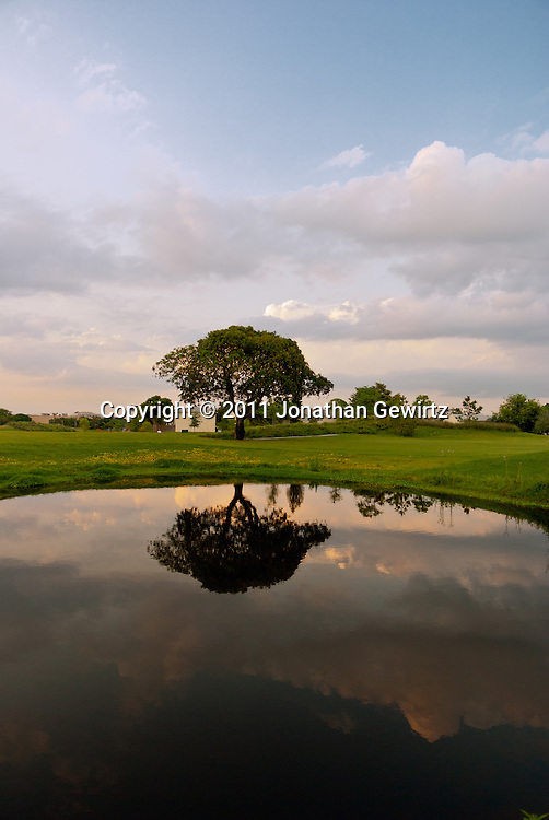 Tree and Pond on Grassy Golf Course WATERMARKS WILL NOT APPEAR ON PRINTS OR LICENSED IMAGES.