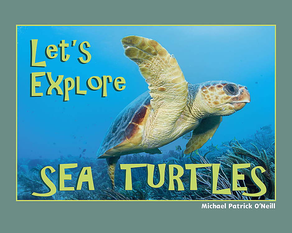 The oceans' ultimate survivors, sea turtles have changed little since the time of <br />