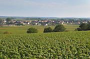 Vineyard. Puligny Montrachet, Cote de Beaune, c d'Or, Burgundy, France