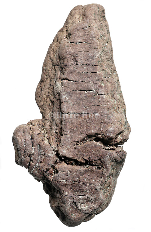 tree bark fragment natural smoothed