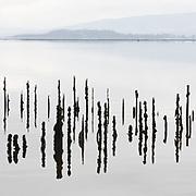 Timber Ponds IV, Kelburn, Inverclyde, Scotland.