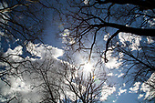 OUTDOORS_Trees and Clouds