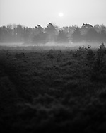 A thin layer of mist covers the ground at dawn at Whitmoor Common near Guildford, UK, on 9th Aptil 2015. Picture by Andrew Tobin/Tobinators Ltd