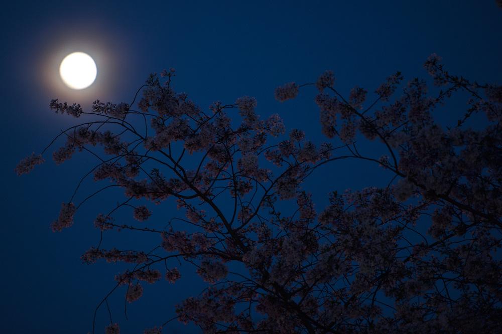 A full moon rises over the Tidal Basin in Southwest Washington. in Washington, DC.