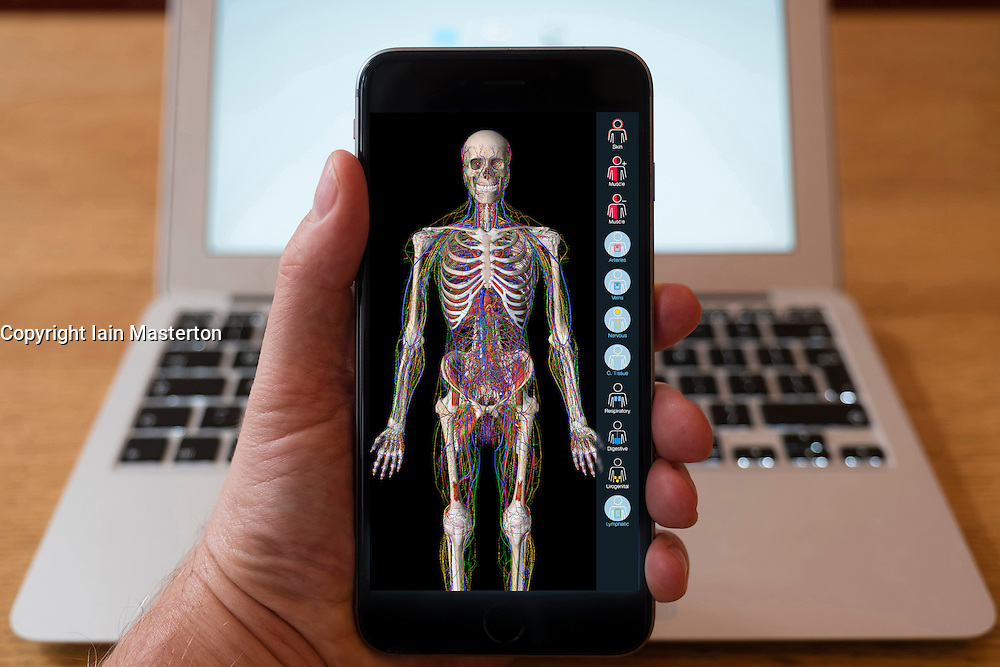Using iPhone smartphone to display anatomy educational app of human body.