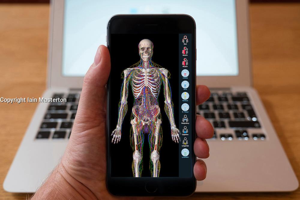 Using iPhone smartphone to display anatomy educational app of human body.