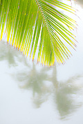 A palm frond against the reflection of palm trees in a tropical lagoon
