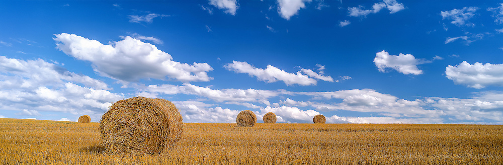 Panoramic rural landscape, harvested corn field and golden straw bales. Canton of Vaud, SWITZERLAND