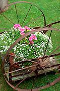 Antique wagon bursting with flower power.  Ottertail County Minnesota USA