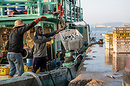 Fishermen unload some of their catch of mackerel at a dock in Kota Kinabalu, Sabah, Malaysia (August 2019)