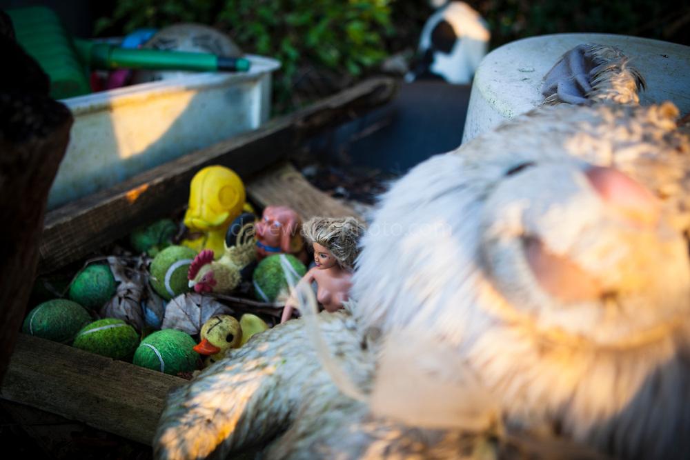 Abandoned toy rabbit washed up on beach