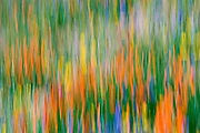 Wildflower abstract, Tehachapi Mountains, Angeles National Forest, California USA