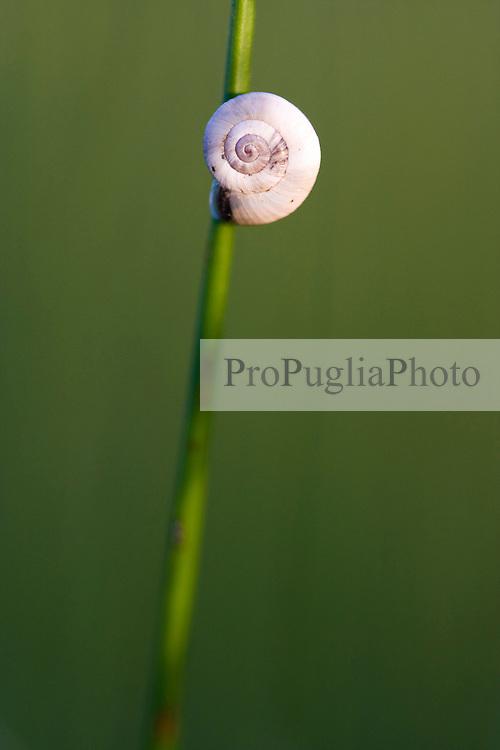 Snail in a meadow.