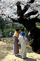"""Rikugien Garden in Tokyo is a famous spot for cherry blossom viewing or """"hanami"""" during early April each year.  These ladies in kimono are checking out this ancient sakura tree.  the name of this garden means the six traditional elements essential to great poetry, a wonderful, romantic sentiment in itself for a garden stroll, but especially apt because the idea has been taken through to the design and layout of this garden which carefully depicts 88 scenes from a classic poem."""